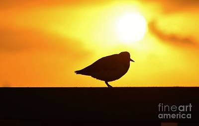 First Sunrise Silhouette Poster by Lynda Dawson-Youngclaus