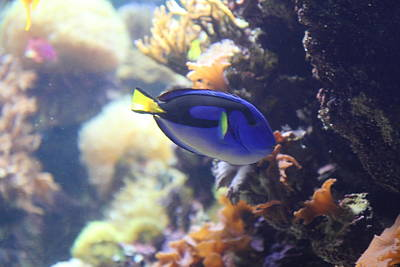 Fish - National Aquarium In Baltimore Md - 1212122 Poster by DC Photographer