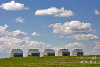 Five Sheds On The Alberta Prairie Poster by Louise Heusinkveld