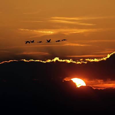 Flamingos At Sunset Poster by Babak Tafreshi