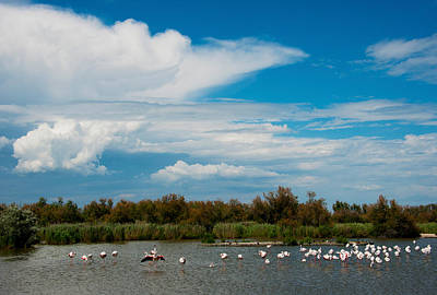 Flamingos In A Lake, Parc Poster by Panoramic Images