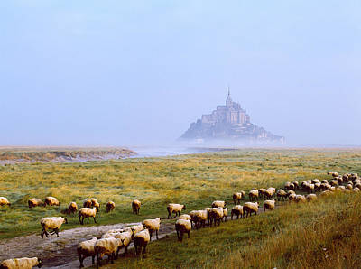 Flock Of Sheep In A Field With Mont Poster by Panoramic Images