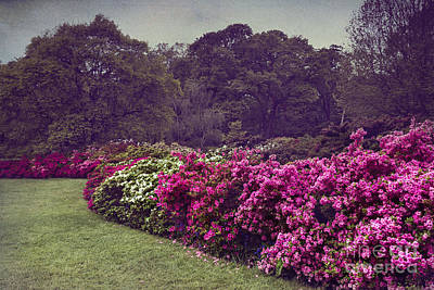 Flower Bush Poster by Svetlana Sewell