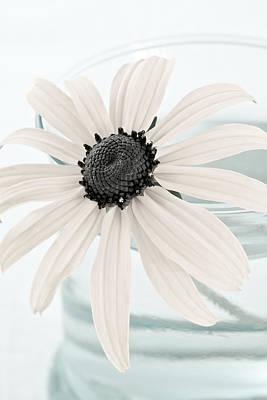 Flower In A Vase Still Life Poster by Frank Tschakert
