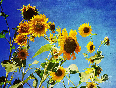Flower -sunflower Surprise Poster by Luther   Fine Art