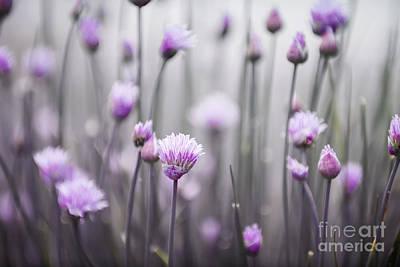 Flowering Chives IIi Poster by Elena Elisseeva
