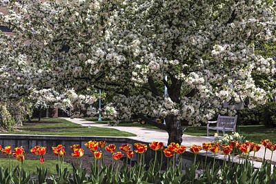 Flowers And Bench At Michigan State University  Poster by John McGraw