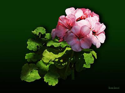 Flowers - Pale Pink Geranium Poster by Susan Savad