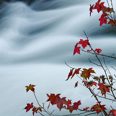 Flowing Water And Changing Leaves Poster by Silvio Ligutti