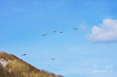 Flying Over The Dunes  Poster by Angela Doelling AD DESIGN Photo and PhotoArt