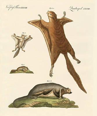 Flying Squirrels Poster by Splendid Art Prints