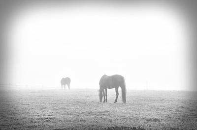 Foggy Farm In Black And White Poster by Bill Cannon