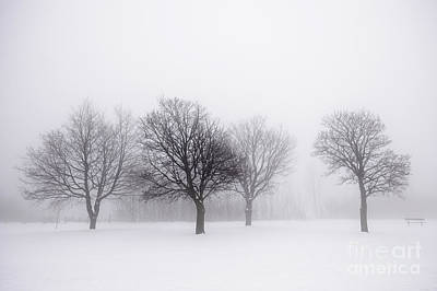 Foggy Park With Winter Trees Poster by Elena Elisseeva