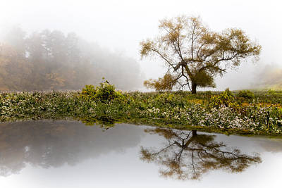 Foggy Reflections Landscape Poster by Debra and Dave Vanderlaan