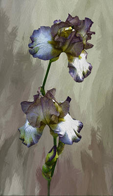 For The Love Of Iris Poster by Diane Schuster