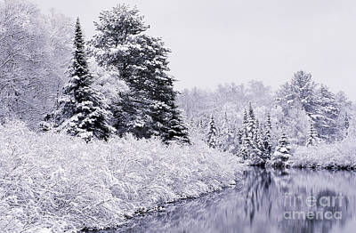 Forest Covered With Snow Poster by Rod Planck