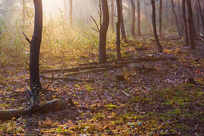 Forest Sunlight Poster by Semmick Photo