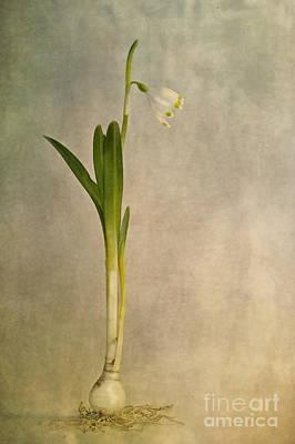 Foretaste Of Spring Poster by Priska Wettstein
