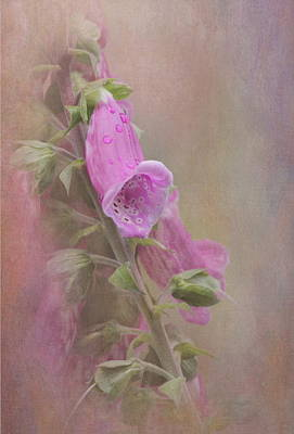 Foxglove Poster by Angie Vogel
