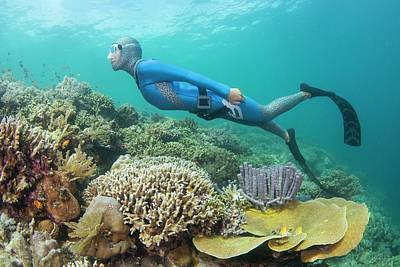 Free Diver Swimming Over Coral Reef Poster by Scubazoo