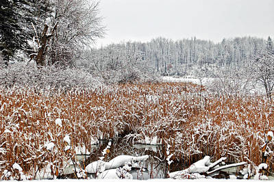 Fresh Snow Landscape Poster by Aimee L Maher Photography and Art Visit ALMGallerydotcom