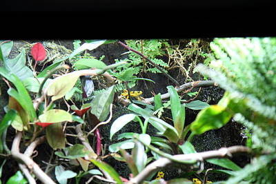 Frog - National Aquarium In Baltimore Md - 12124 Poster by DC Photographer