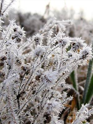 Frost In The Field Poster by J McCombie