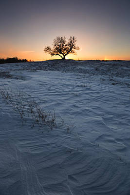 Frozen Tree Of Wisdom Poster by Aaron J Groen