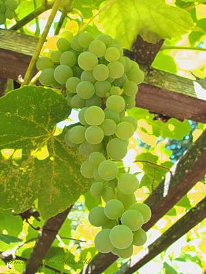 Fruit Of The Vine Poster by Brooks Garten Hauschild