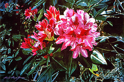Fuschia Rhododendrons Poster by David Lloyd Glover