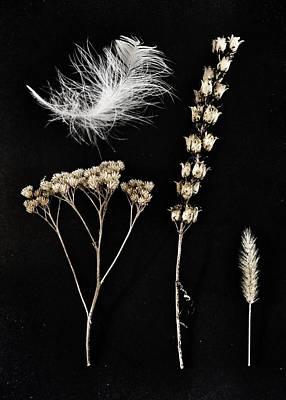 Garden Finds Poster by Marianna Mills