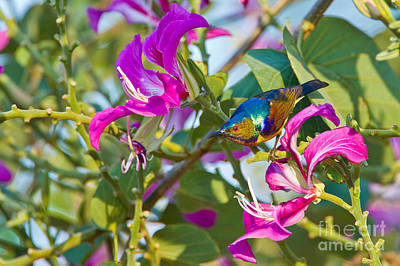 Garden Jewels Poster by Ashley Vincent