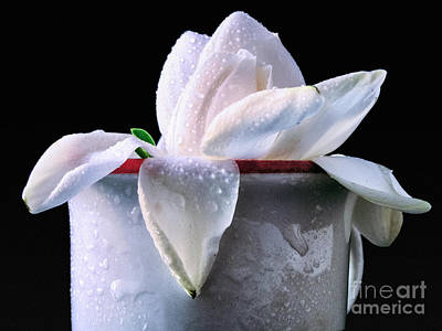 Gardenia In Coffee Cup Poster by Silvia Ganora