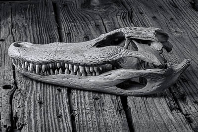 Gator Black And White Poster by Garry Gay