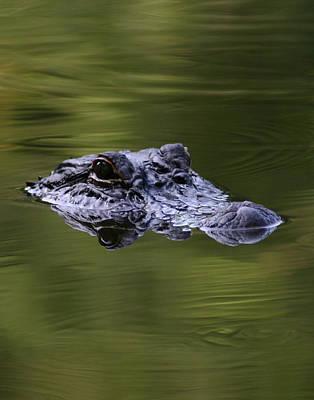 Gator Eyes 11x14 Poster by David Lynch