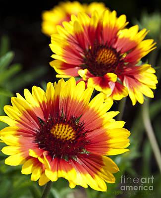 Gazebo Flowers Poster by Nancy E Stein