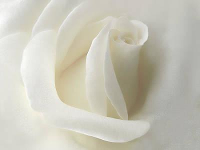 Gentle White Rose Flower Poster by Jennie Marie Schell