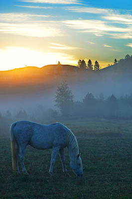 Ghost Horse Poster by Annie Pflueger