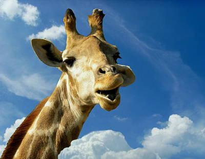 Giraffe Poster by Heike Hultsch