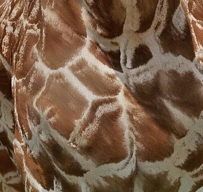 Giraffe Patterns Poster by Dan Sproul