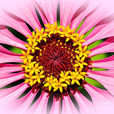 Glowing Zinnia - Square By Kaye Menner Poster by Kaye Menner