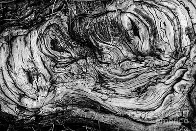 Gnarled Wood Poster by Amy Cicconi
