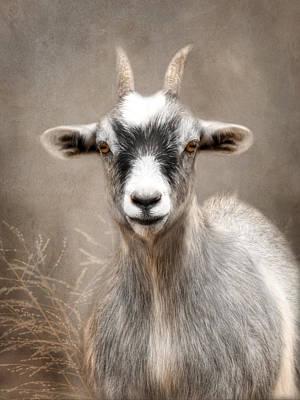 Goat Portrait Poster by Lori Deiter