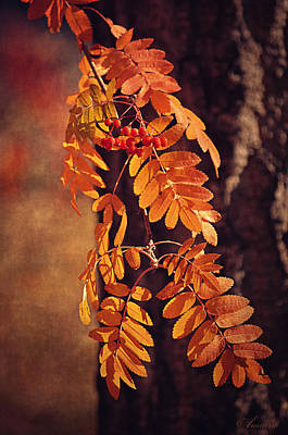 Golden Autumn Leaves  Poster by Maria Angelica Maira