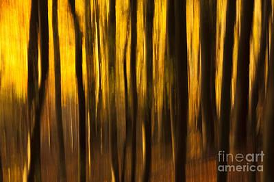 Golden Blur Poster by Anne Gilbert