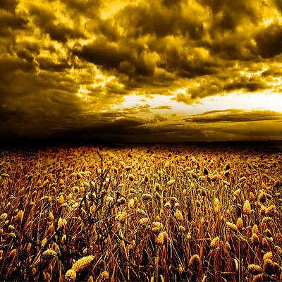 Golden Fields Poster by Jacky Gerritsen