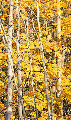 Golden Leaves In Autumn Abstract 2 Poster by Jennie Marie Schell