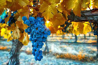 Golden Leaves With Grapes Poster by Lynn Hopwood
