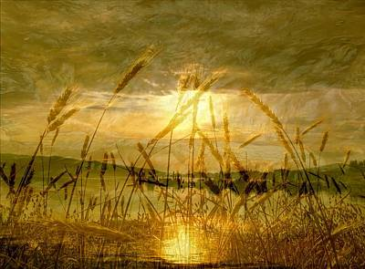 Golden Sunset Poster by Barbara St Jean