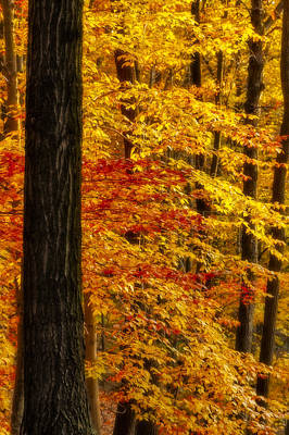Golden Trees Glowing Poster by Susan Candelario